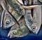 pesce d'aprile