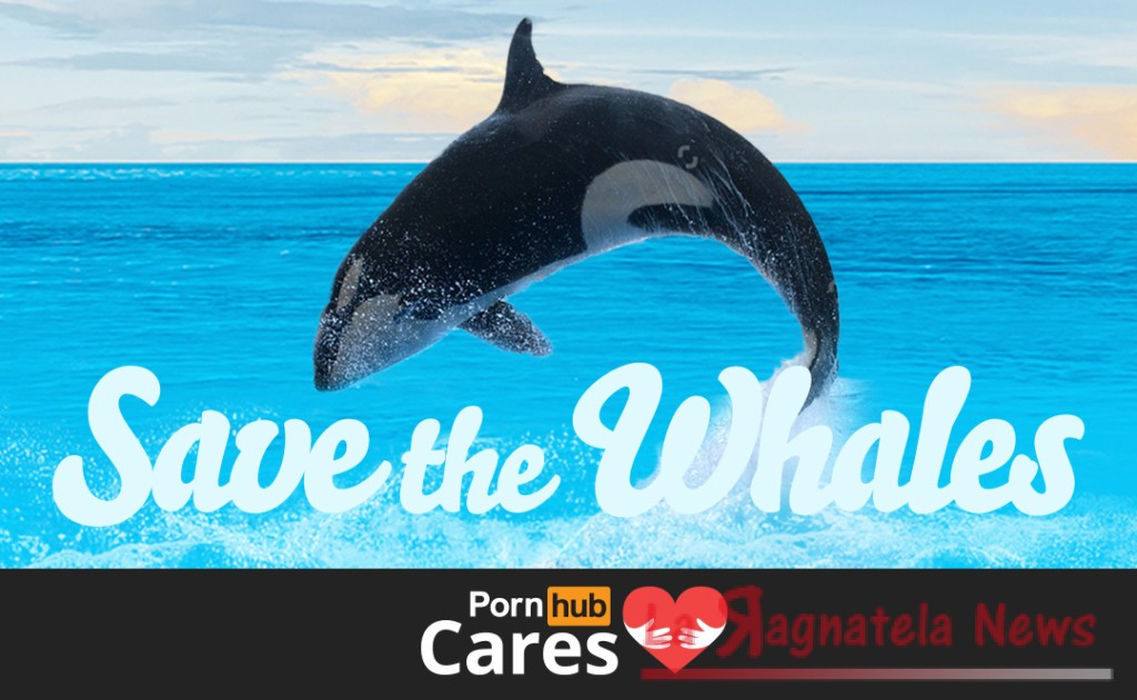 pornhub salva le balene