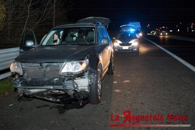 Branco di cinghiali in autostrada: 6 auto danneggiate, 8 animali uccisi